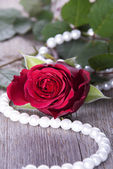 Red Rose on Timber — Stock Photo