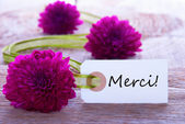 Green Purple Baclground with Merci — Stock Photo