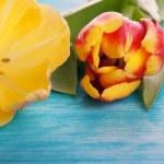 Постер, плакат: Two Tulips