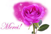 Pink Rose with Merci — Stock Photo