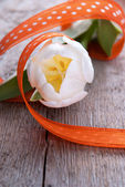 Tulip as Easter Background — Stock Photo