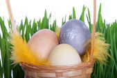 Baket with Easter Eggs — Stock Photo