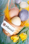 Easter Nest with Merci — Stock Photo