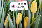 Happy Easter with Tulips — Stock Photo