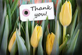 Tulip Background with Thank You — Stock Photo