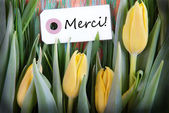 Tulip Background with Merci — Stock Photo
