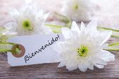 Label with Bienvenido — Stok fotoğraf