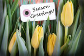 Label with Season Greetings — Stock Photo