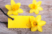 Yellow Empty Tag — Stockfoto