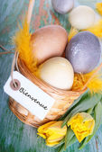 Easter Nest with Bienvenue — Photo