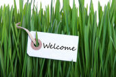 Label in the Gras with Welcome — Stockfoto