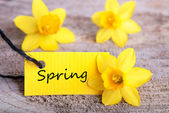 Label with Spring — Stock Photo
