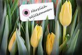 Tulip Background with Herzlich Willkommen — Stock Photo