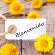 Yellow Flowers with Bienvenido — Stock Photo #46631013