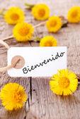 Yellow Flowers with Bienvenido — Stock Photo