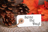 Autumn Label with Seize the Day — Stock Photo