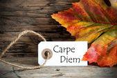 Autumn Label with Carpe Diem — Stock Photo
