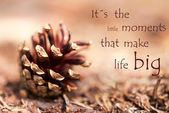 Fir Cone with Saying Its the little Moments that make Life Big — Stock Photo