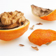 Nut with orange peel — Stock Photo #18335639