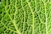 Cabbage leaf — Stock Photo