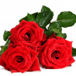 Red roses — Stock Photo #16772471