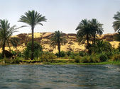 The Nile and palms ll — Stockfoto