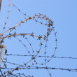 Stockfoto: Barbed wire in jail