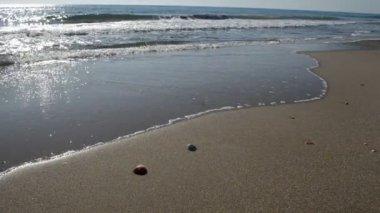 Shells on the sea shore hd — Stock Video