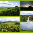 Vineyards in one collage  — Stock Photo