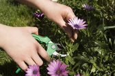 Pruning a flower horizontal — Stock Photo
