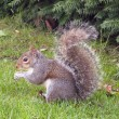 Stock Photo: Squirrel holding nut