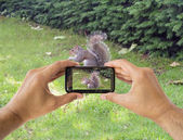 Photographing a squirre — Stock Photo