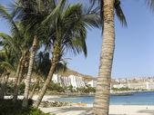 White beach and palm — Stock Photo