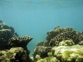 большие кораллы — Стоковое фото