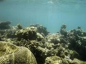 Barrière de corail en mer rouge — Photo