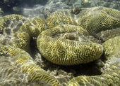 коралловых рифов в красном море — Стоковое фото