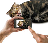 Cat does not like to take pictures — Stock Photo