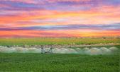An irrigation pivot watering a field — Stock Photo