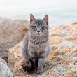 Stock Photo: Cat siting on beach