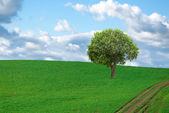 Beautiful landscape and lone tree — Stock Photo