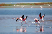 Izmir Bird paradise, flamingos — Stock Photo