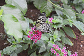 White butterfly with black spots — 图库照片