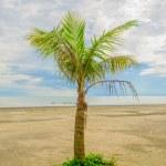 Coconut tree — Stock Photo #14481127