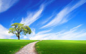 Tree in the green grass near the path — Stock Photo
