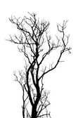 Leafless tree branches abstract background. Black and white — Stock Photo