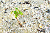 Small plant on sand — Stock Photo