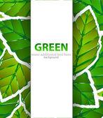 Fondo de papel de hojas verdes — Vector de stock