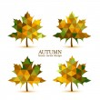 Autumn vector leaves — Stock Vector