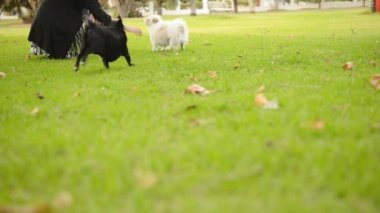 женщина с собакой — Стоковое видео
