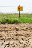 Dried soil and flowered minefield — Stock Photo